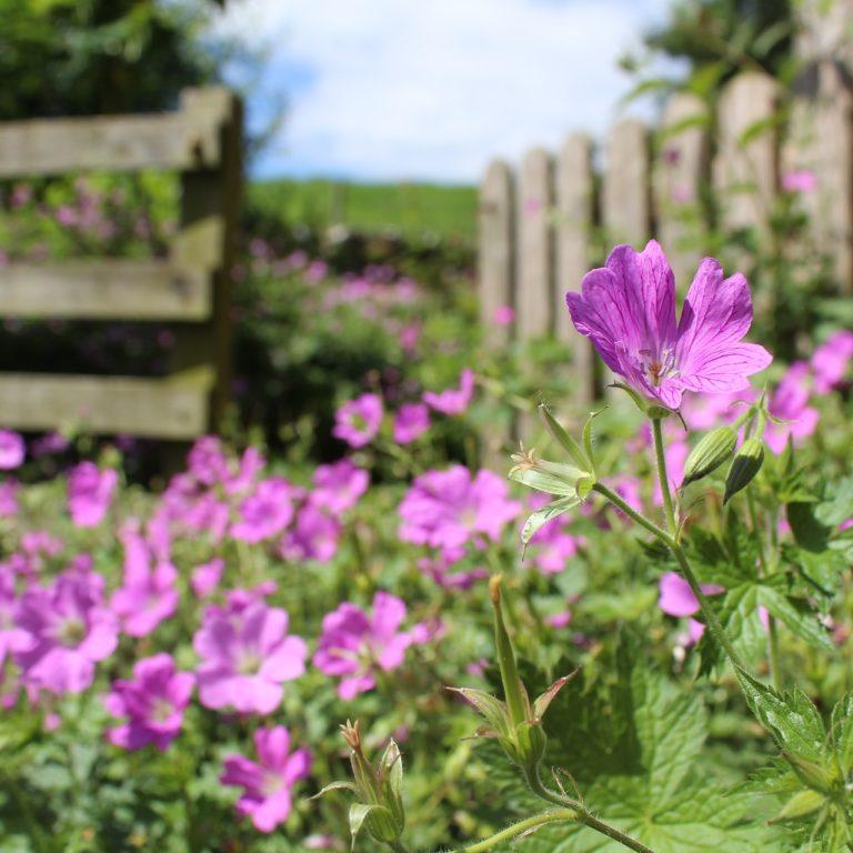 rabaty kwiatowe - kompozycje do ogrodu