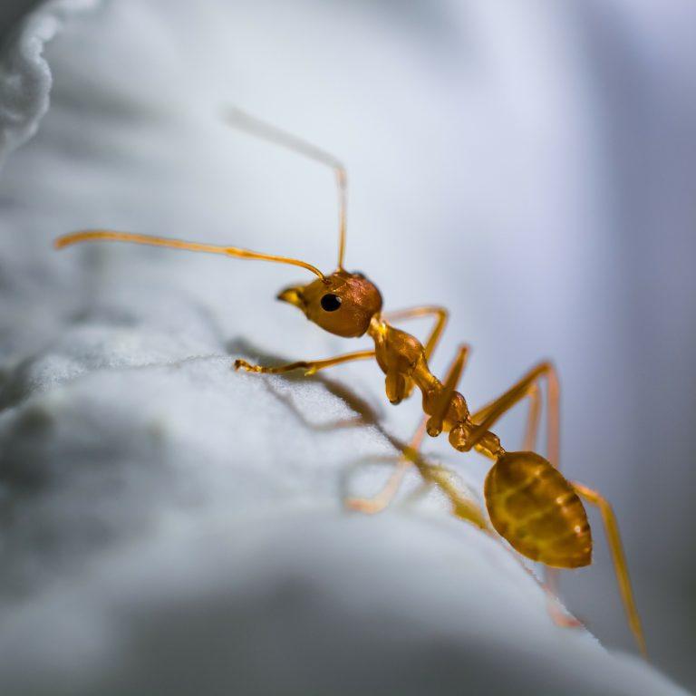 Zwalczanie mrówek z domu i mieszkania