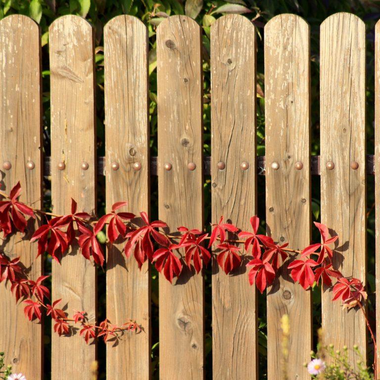 ogrodzenie działki