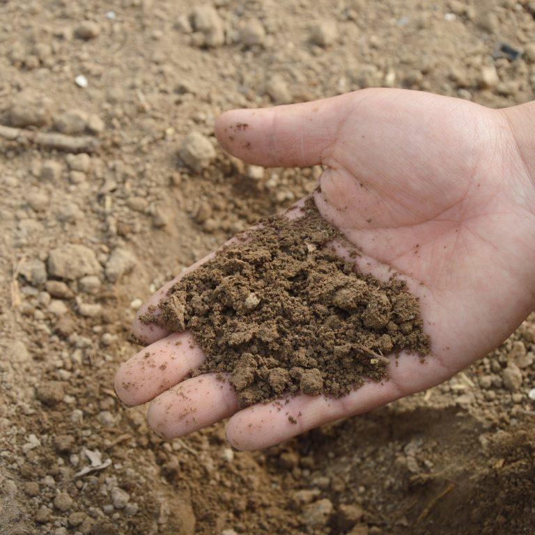 Właściwości gleby w ogrodzie