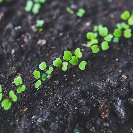 Nawożenie roślin w ogrodzie - poradnik dla początkującego ogrodnika