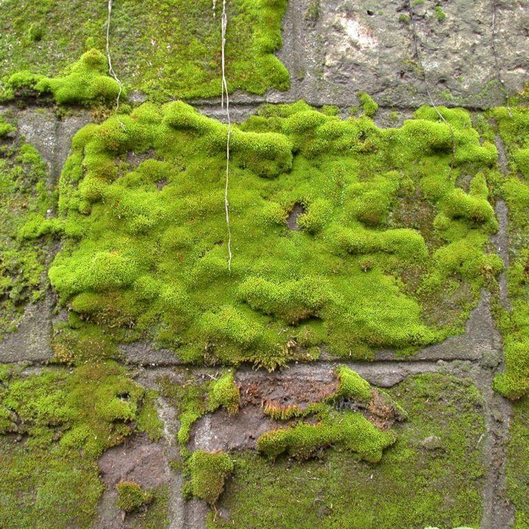 Ściany z mchu