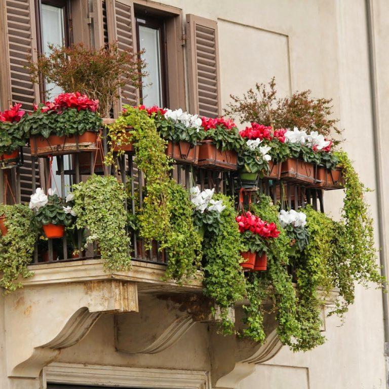 Pielęgnacja balkonowych roślin kwitnących- na czym polega?