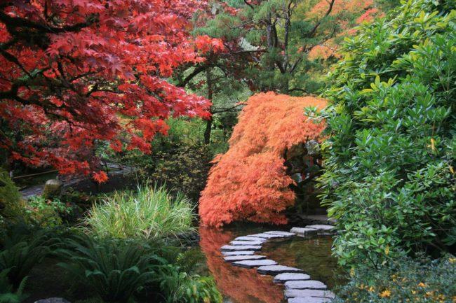 Ogród japoński - jakie rośliny wybrać?