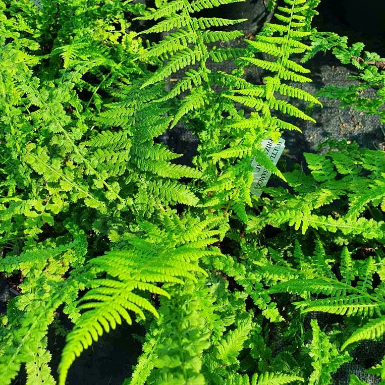 Ogród japoński rośliny, na które warto postawić