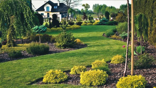 Zakładamy ogród - z projektantem